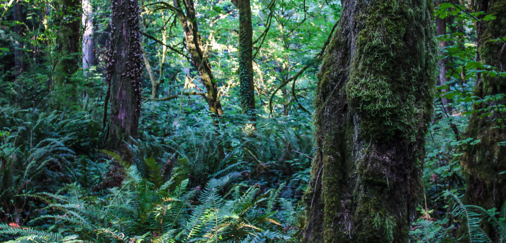 Richard L. Hughes practices environmental law